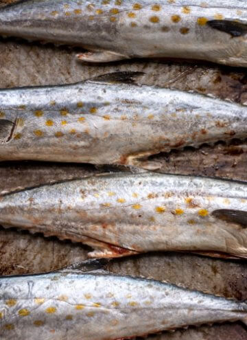 Sheet pan with several cleaned spanish mackerel ready to be oiled, stuffed and grilled