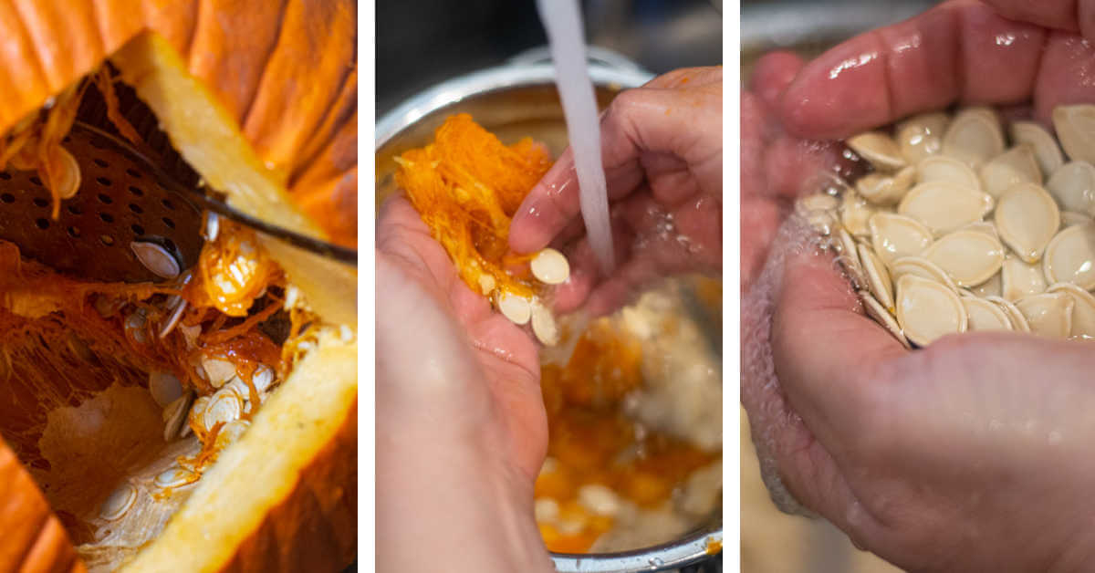 three steps to scoop the seeds from the pumpkin, wash them to remove the pulp and clean them.